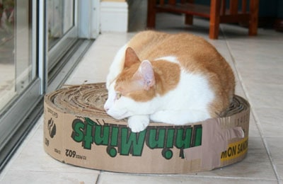 cat laying on a cardboard roll made from Girl Scout Cookies Case Box
