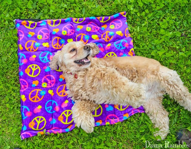 DIY Dog Summer Cool-Off Pad Tutorial Happy Dog