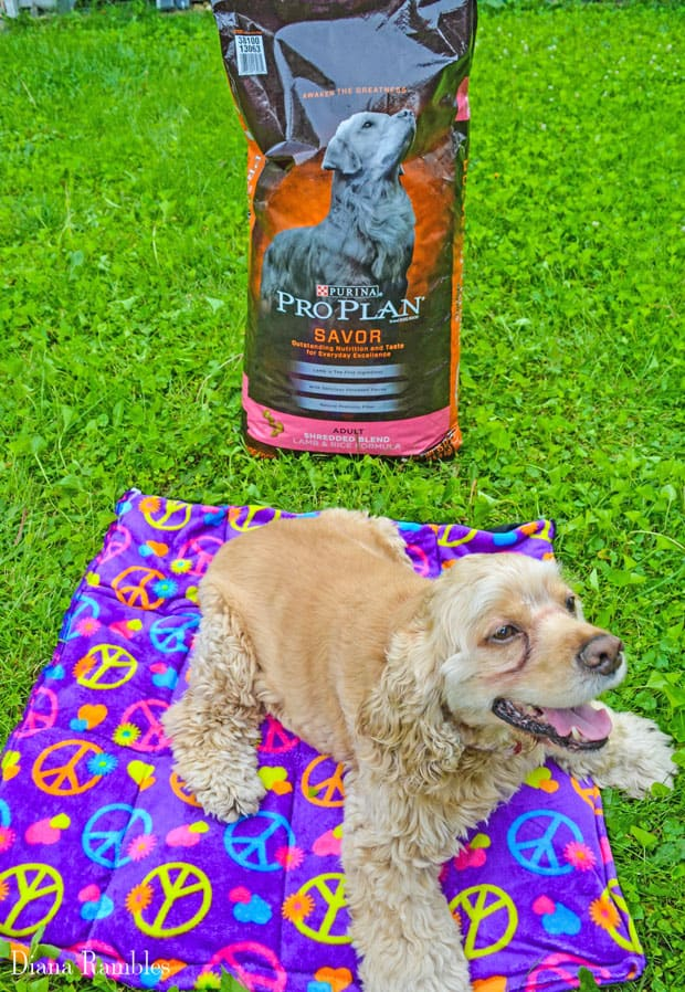 DIY Dog Summer Cool-Off Pad Tutorial Pro Plan PetSmart