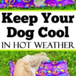 DIY Dog Cooling Mat Sewing Tutorial - Want to keep your dog cooled off this summer? Here is a DIY Dog Cooling Mat Tutorial that will keep your pooch cool while he's outside with the family. It's a great pet bed for warm weather climates. It's easy to make and only requires basic sewing skills. Custom mats are for sale if you are unable to sew.