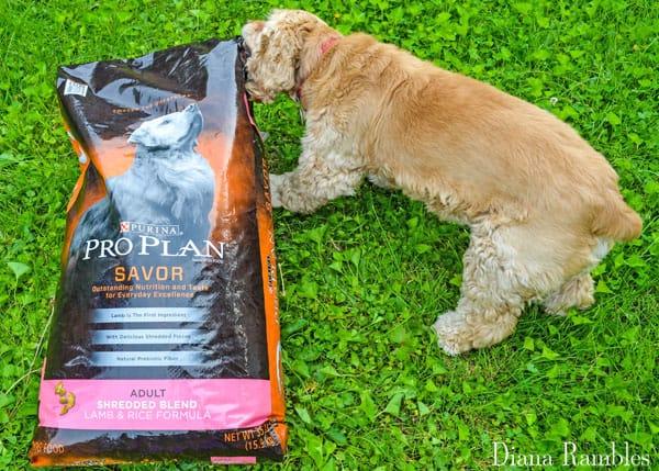 Pro Plan Savor PetSmart