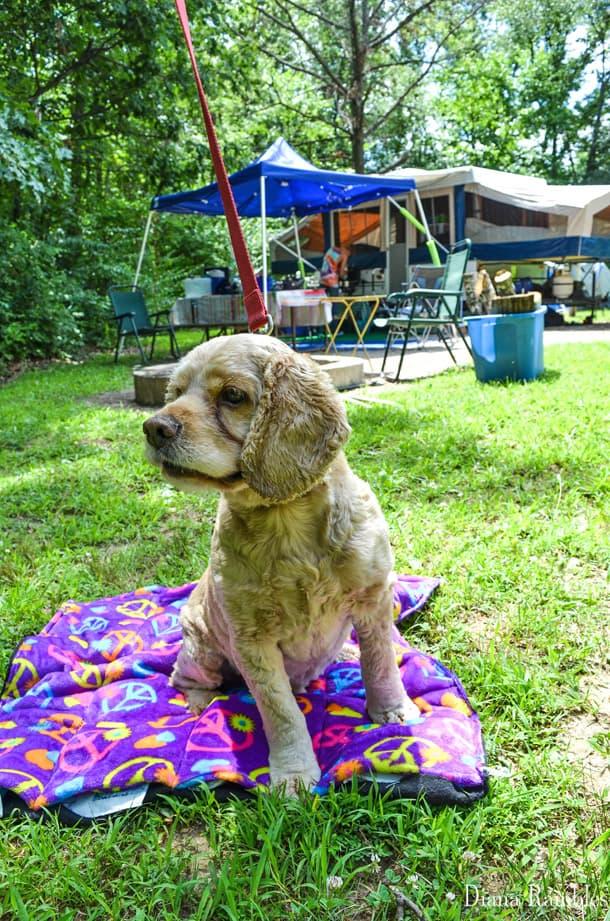DIY Dog Cool Off Pad