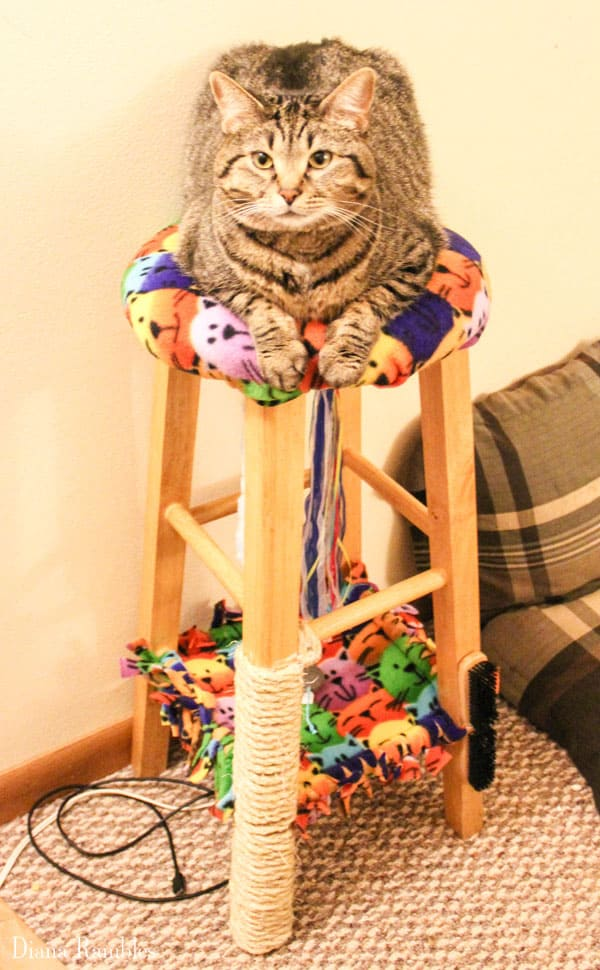cat on top of a cat condo made from a stool