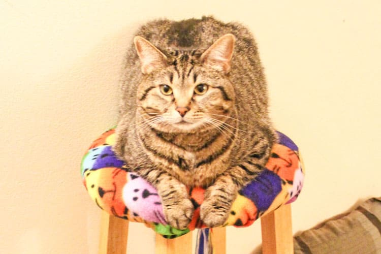 cat on a stool