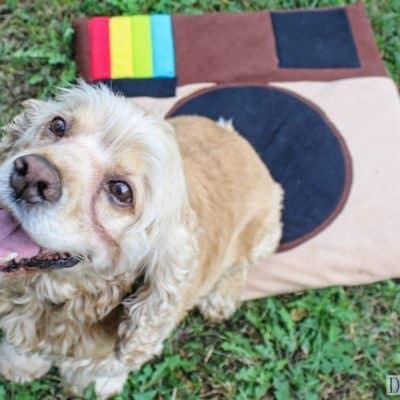 DIY Instagram Dog Bed