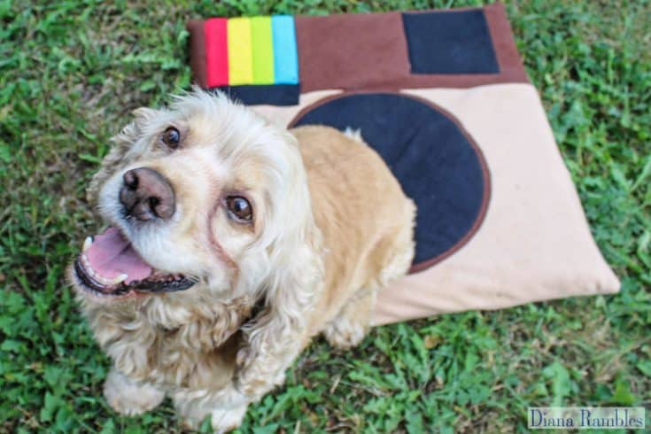 DIY Instagram Dog Bed